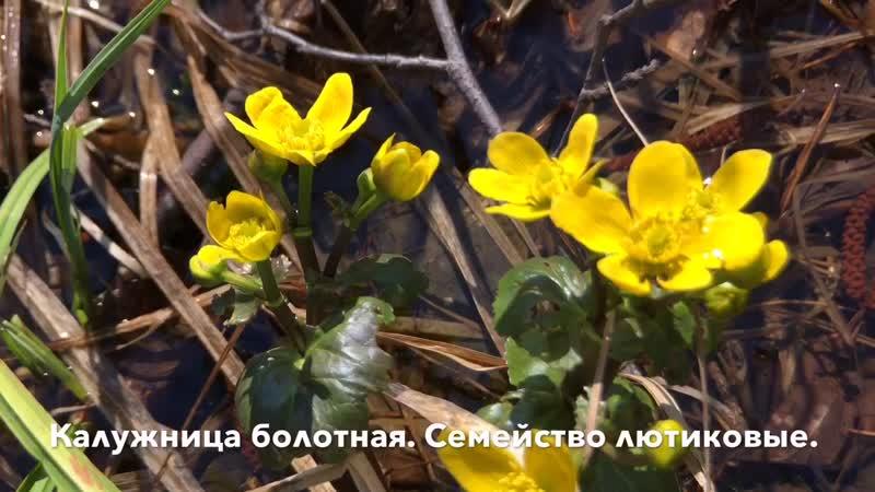 Верховое болото в начале мая. В поисках клюквы