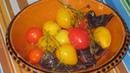 Квашенные помидоры черри