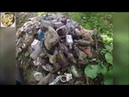 Коп на мусорке Кёнигсберга