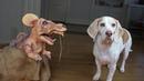 Funny Animals - dogs vs mouse - cruel dog