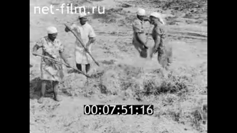 1981г с Черки Гришино совхоз Ватан Буинский район Татарстан