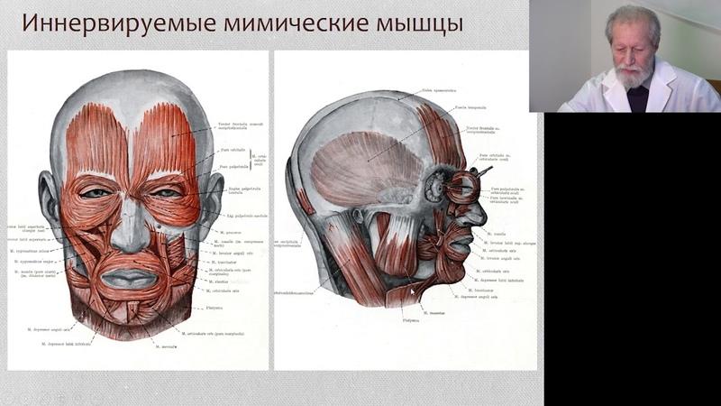 Лицевой нерв и его патология (базис) доцент кафедры неврологии и мануальной медицины Кодзаев Ю.К.
