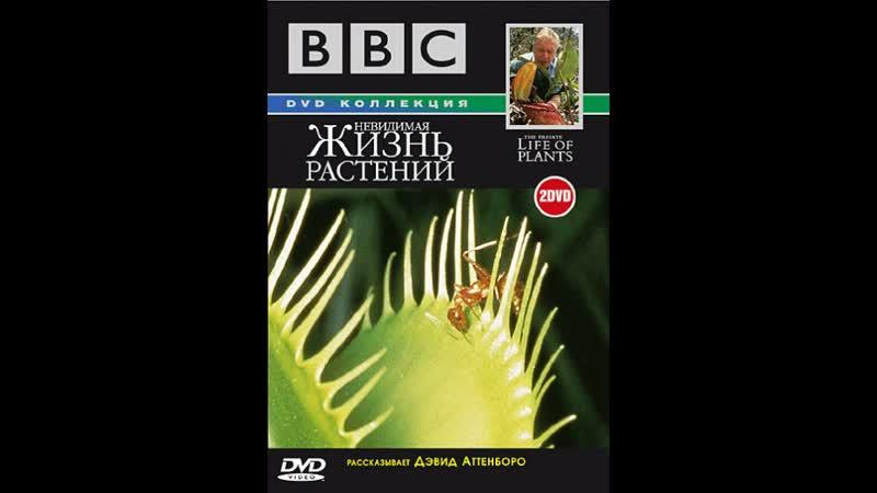 BBC Невидимая жизнь растений 1995 г The Private Life of Plants 6 серий