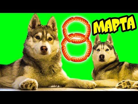 БУКЕТ ИЗ СОСИСОК НА 8 МАРТА 🌭 Хаски Бублик Говорящая собака Mister Booble