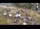 Птичья борьба за жрачку)