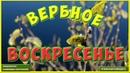 С вербным воскресеньем поздравление Вербное воскресенье видео открытка