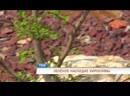В Перми посадили «зелёное наследие Хиросимы»