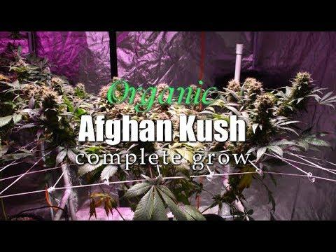 COMPLETE ORGANIC AFGHAN KUSH GROW - CANNABIS