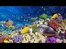 Breathtaking Dive in Raja Ampat West Papua Indonesia Coral Reef