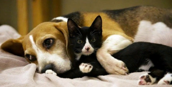 Кто лучше кот или собака Кого лучше завести: плюсы и минусы