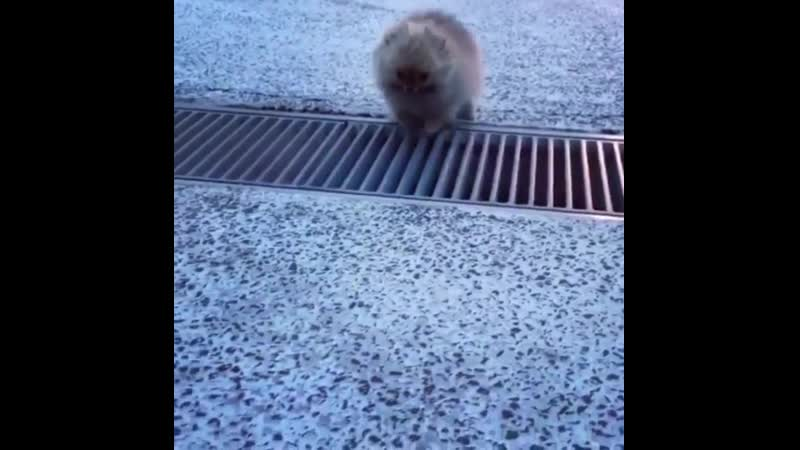Tiny puppy overcomes a grate
