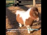 Самая маленькая пони