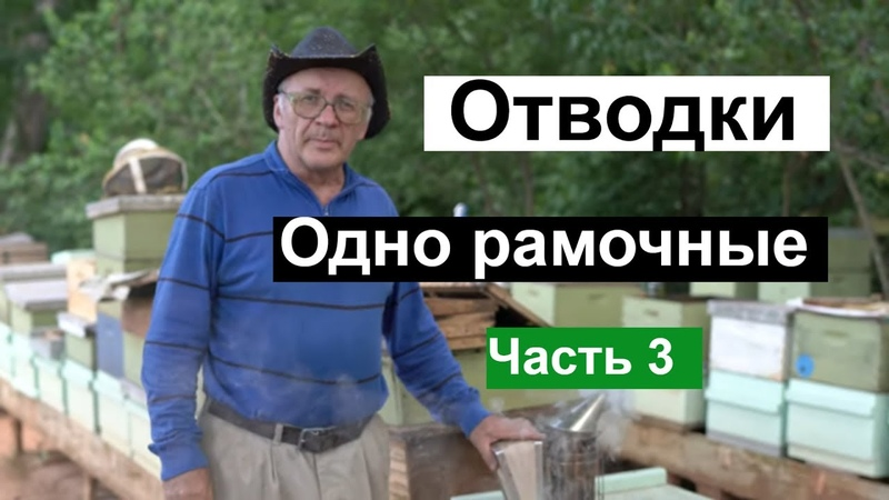 Пасека 121 Одно рамочные ОТВОДКИ Матки Маточники Мёд и Пчелы Пчеловодство для начинающих