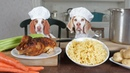 Chef Dogs Cook Chicken Noodle Soup: Funny Dogs Maymo Potpie