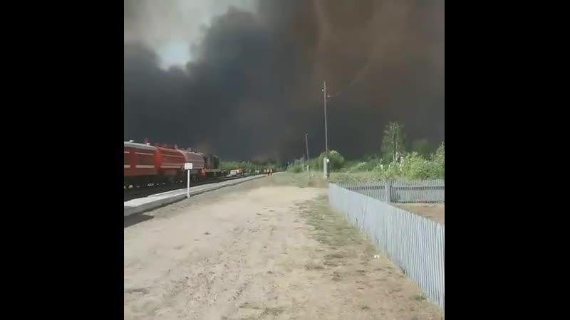 Происшествия. Пожар около Свеженькой 23062019