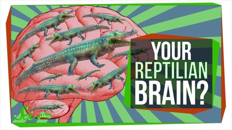No, You Don't Have a Reptilian Brain