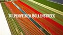 Tulpenvelden Bollenstreek   Drone Video Tulip in the Netherlands