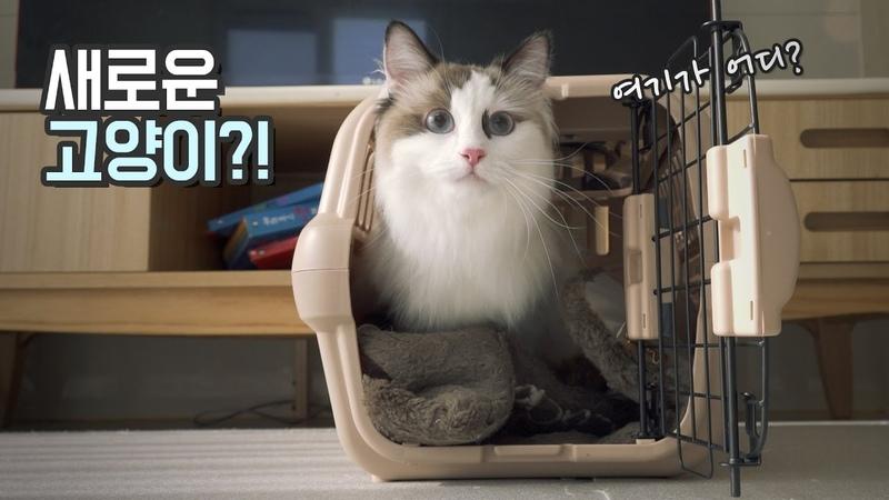 새로운 고양이!! 친동생네 고양이 탁묘하는 날