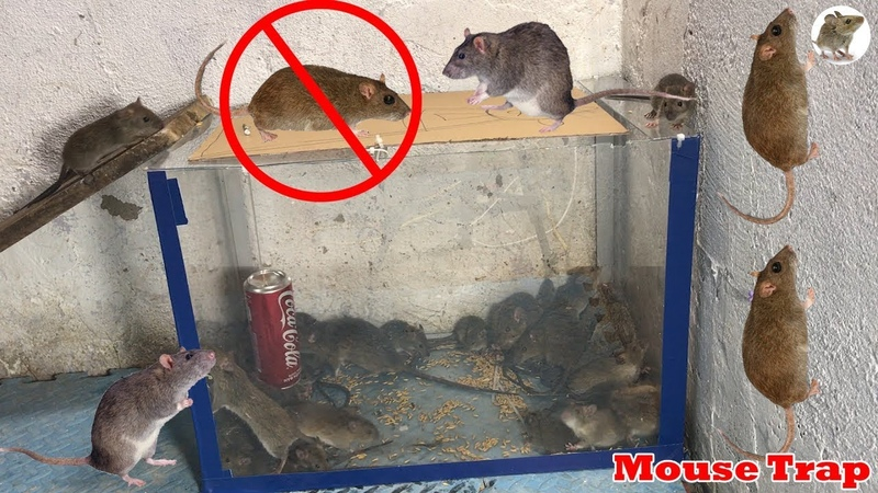 Water Mouse Trap | How to make a Mouse Trap water Homemade mouse trap | Best Water Mice trap