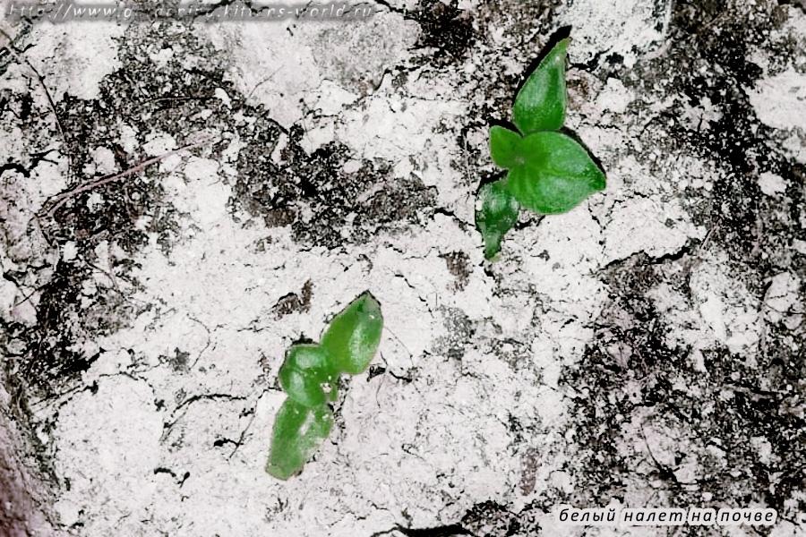 Удаление белого налета и налета плесени, мха с поверхности почвы