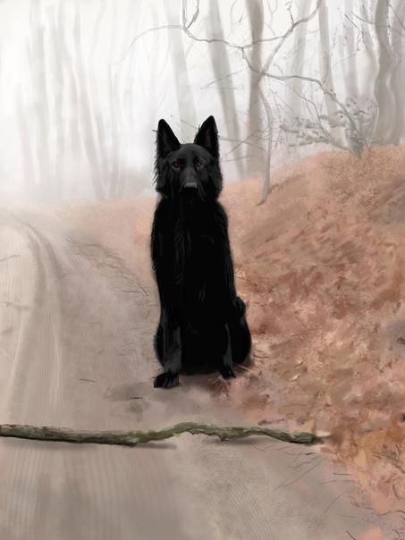 Посылочка с того света У подруги собачка умерла возрастная. Со щеночка вынянченная. Любимая. Половина сердца, считай, умерла, и подруга моя от горя слегла: заболела так, что помирать собралась.