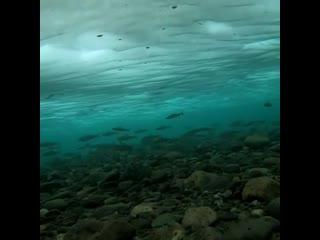 Хариус. Подводная съемка. Б. Абакан. #хариус #абакан #большойабакан #рыбалканагорнойреке #рыбалка #подводнаясъемка