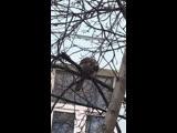 Кто знает, какая это птица Часто вижу ее возл