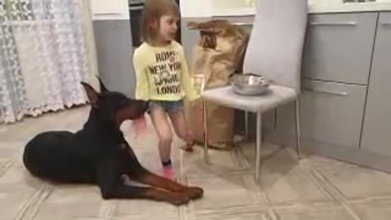 Каша BARBOSSA или как правильно накормить собаку