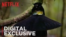 Our Planet | Birds Of Paradise | Exclusive Clip | Netflix