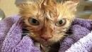 Я РЖАЛ ПОЛ ЧАСА. Смешные Коты и Собаки. ПРИКОЛЫ С ЖИВОТНЫМИ. 6