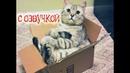 Приколы с котами С ОЗВУЧКОЙ – ПОПРОБУЙ НЕ ЗАСМЕЯТЬСЯ – ТЕСТ НА ПСИХИКУ - PSO
