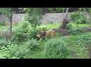 В киевском зоопарке. Остров зверей.