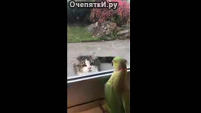Попугай играет в прятки с котом