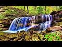 Шум ручья в лесу, пение птиц. Звук ручья, шум воды - 1 час для дневного сна, релаксации и отдыха