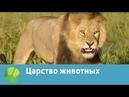 Царство животных | Живая Планета