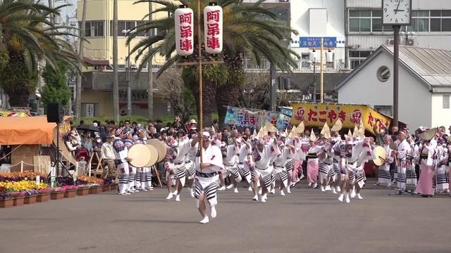 はな・はる・フェスタ2019 Awaodori「阿呆連」Traditional Japanese dance 春らんまん阿波おどり 2019 4 2
