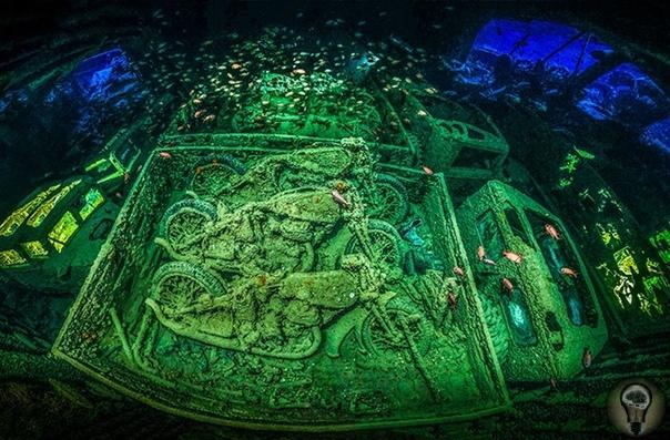 ПОДВОДНЫЙ МИР. Ч.-2 1. Песчаная тигровая акула в окружении крошечных рыбок (слева) / Образ жизни (справа) 2. Рай 3. Брачные игры 4. Гигант-убийца 5. Любопытный охотник за крабами (тюлень-крабоед