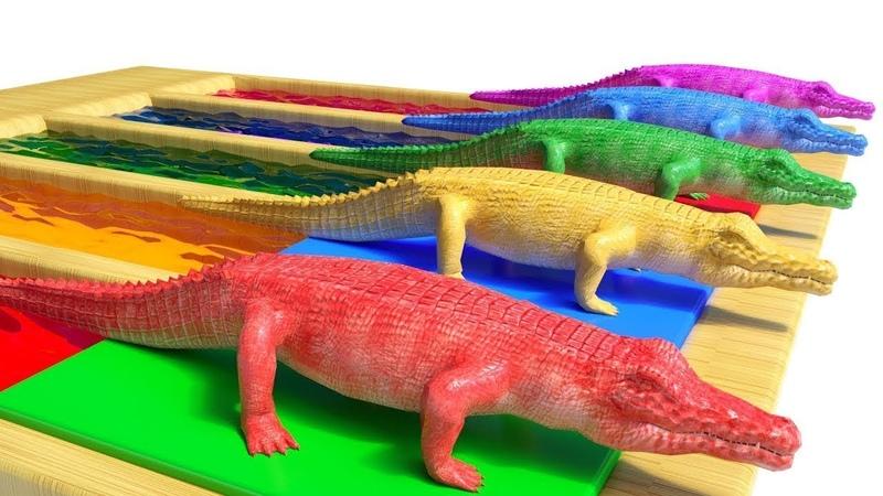 Los animales salvajes y sus crías se transforman en animales acuaticos (parte 1) sonidos de animales
