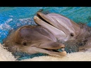 Дельфинотерапия, звуки дельфинов и моря для релакса