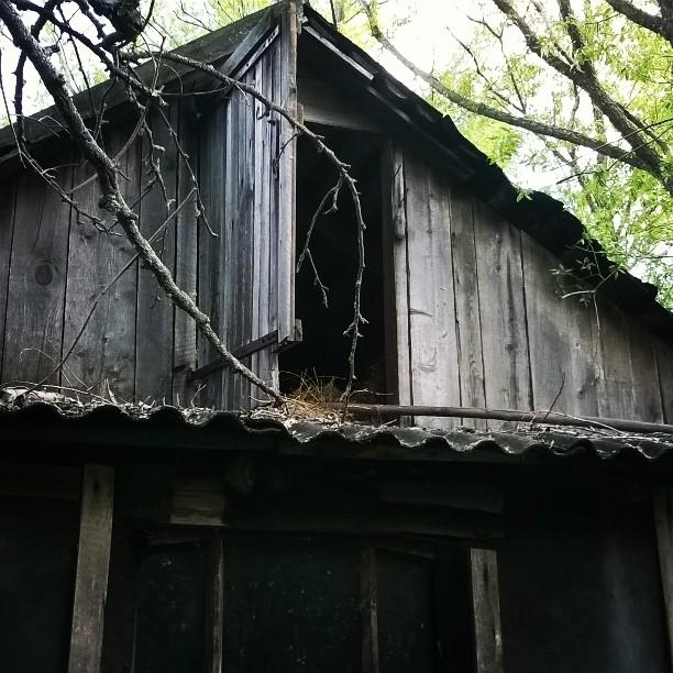 Заброшенный хутор в Воронежской области