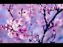Healing Chinese ZEN music of Anxiety Stress To pacify the body Mind Relax Music