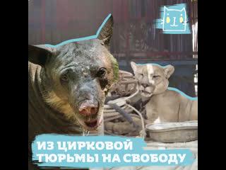 Животных выпустили из цирка: первые минуты на свободе