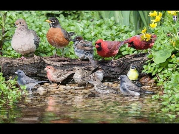 Canto de Pájaros al Amanecer-Sonido de Agua, Relaxing Rainforest Sounds-Morning Nature Sounds