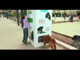 Вместо бутылок корм бездомным собакам