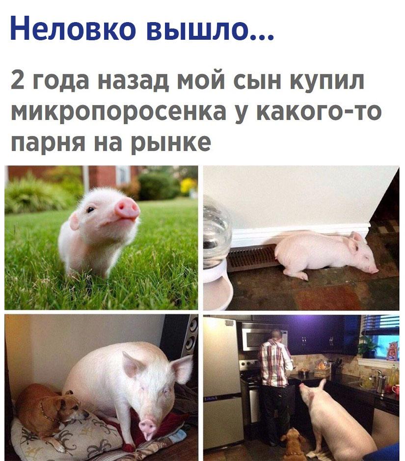 Хороший шашлык вырос через 2 года)