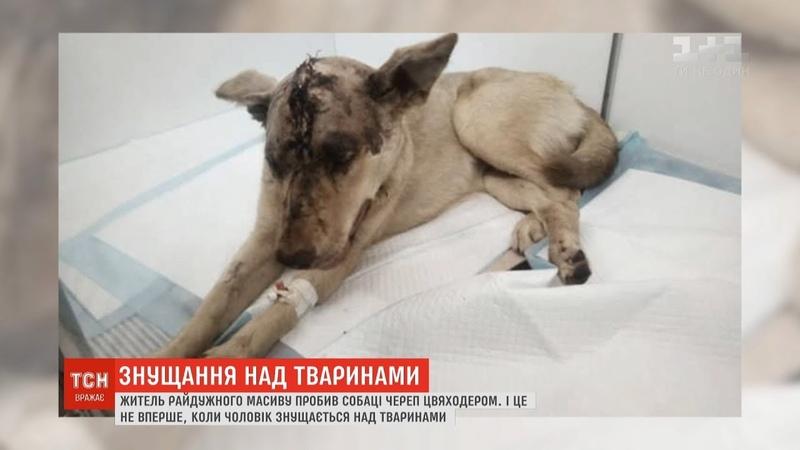 Засідання суду проігнорував киянин який пробив собаці череп та викинув помирати під мостом