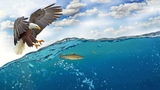 Картинка птица. Небо, море, волны, рыбы, охотник, орел. Imaxe, paxaro, ceo, mar, ondas, peixe