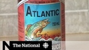 Stinky, rotten fish sauce has residents of Newfoundland town demanding action