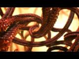 BBC Внутренняя Вселенная: Тайная жизнь клетки / Universe: The Hidden Life of the Cell
