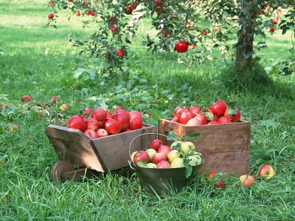 Совместимость плодовых деревьев и кустарников